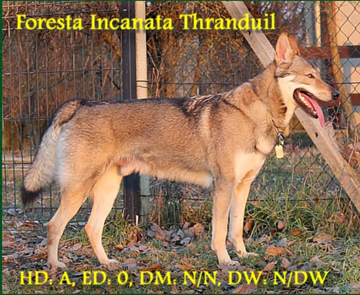 FORESTA INCANTATA THRANDUIL
